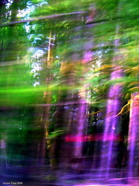 Wall Art - Photograph - Nearly Every Tree Guards A Secret  by Jane Tripp