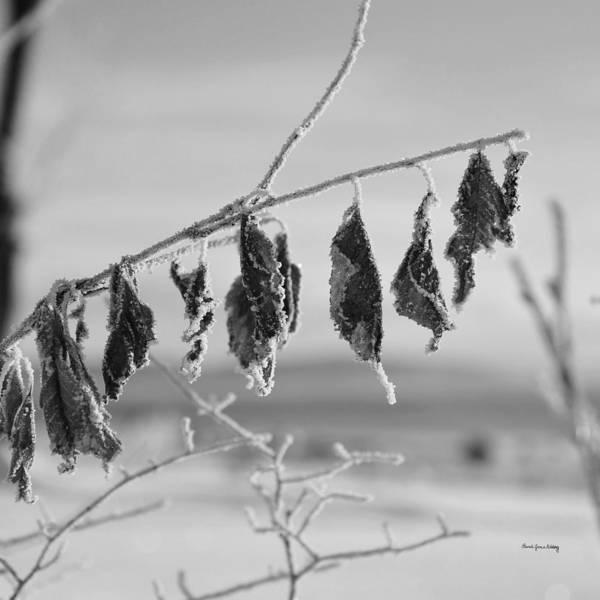 Photograph - Neatness by Randi Grace Nilsberg