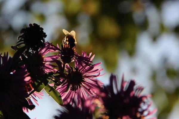 Photograph - Nectar Collectar  by David Andersen