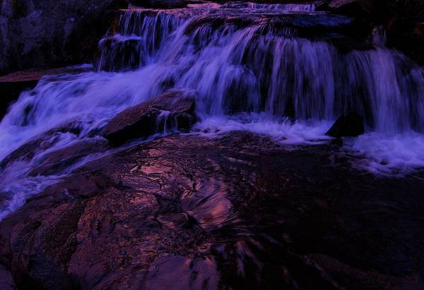 Photograph - Nectar Of The Gods by Sean Sarsfield