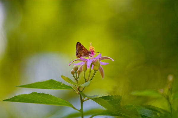 Wall Art - Photograph - Nectar Treat by Az Jackson