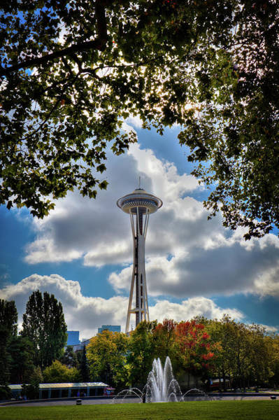Photograph - Needle Through The Trees by David Patterson