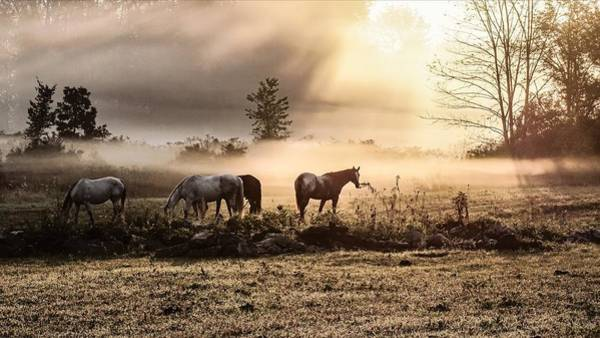 Photograph - Neigh Sayers by Kendall McKernon