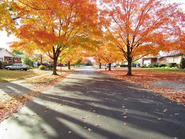 Photograph - Neighborhood Autumn by Robert Knight