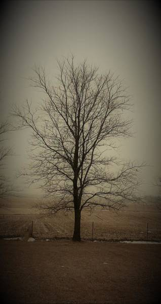 Wall Art - Photograph - Neighbors Tree by Toni Grote