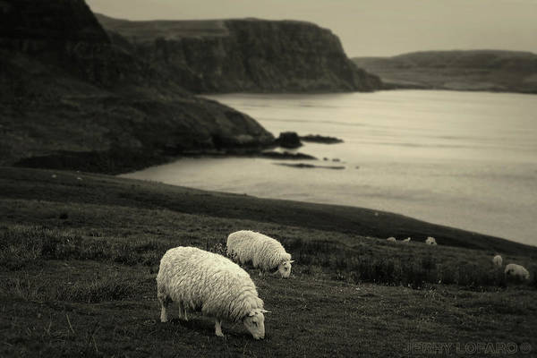 Livestock Photograph - Neist Point by Jerry LoFaro