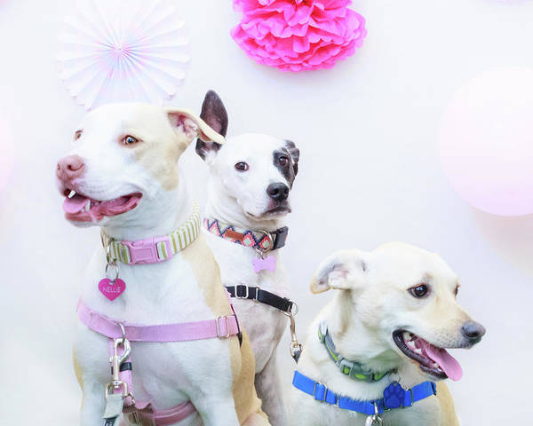 Photograph - Nellie, Bella And Duke by Jeanette Fellows