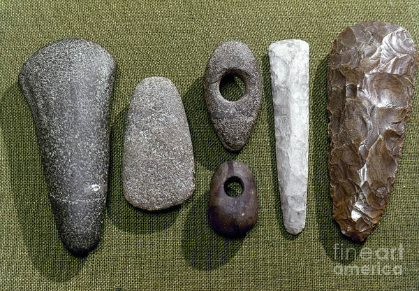 Photograph - Neolithic Tools by Granger