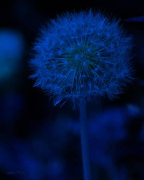 Photograph - Neon Blue Dandolion by Lesa Fine