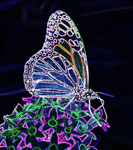 Neon Pink Photograph - Neon Butterfly  by Betty LaRue