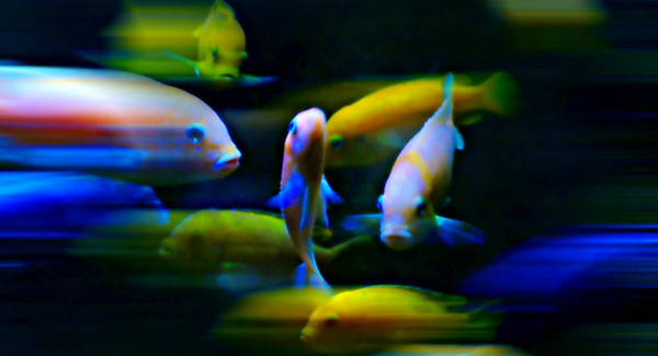 Fish Tank Photograph - Neon Flash by Diana Angstadt