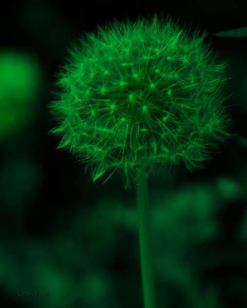 Photograph - Neon Green Dandolion by Lesa Fine