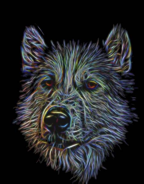 Photograph - Neon Husky by Brian Cross