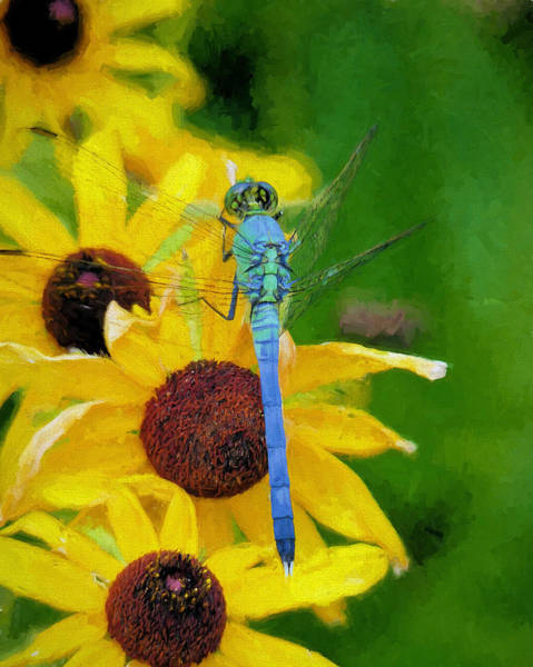 Blue Dragonfly Photograph - Neon Pastels by JC Findley