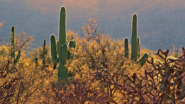 Photograph - Neon Saguaro by Susan Rissi Tregoning