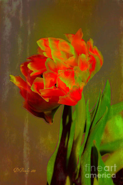 Photograph - Neon Tulip by Donna Bentley