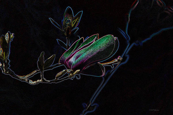 Photograph - Neon Tulip Tree 5090 by Ericamaxine Price