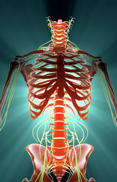 Front Digital Art - Nerves by MedicalRF.com