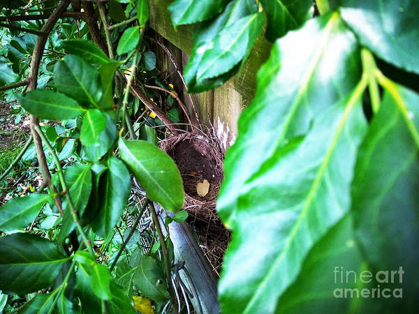 Photograph - Nest In Plain Sight by Robert Knight