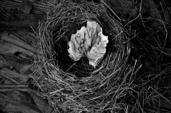 Photograph -  Nest In Time Black And White by Lesa Fine