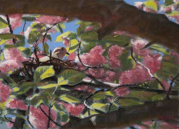 Pastel - Nesting by Christopher Reid