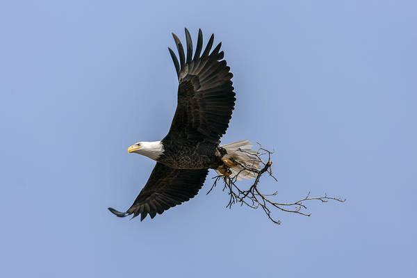 Photograph - Nesting Materials 2 by Liza Eckardt