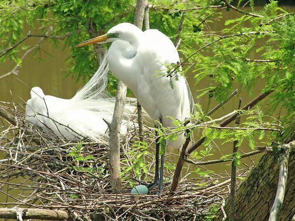 Photograph - Nesting by Ree Reid