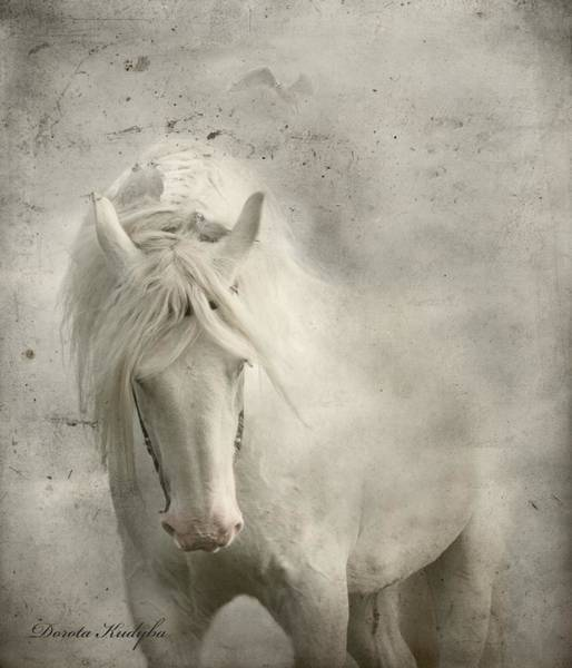 Grey Horse Photograph - Nesting Time by Dorota Kudyba