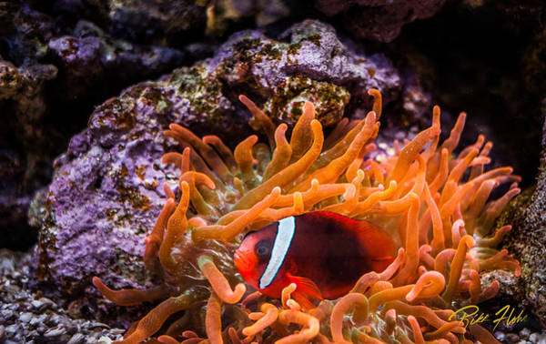 Photograph - Nestled In The Tentacles by Rikk Flohr