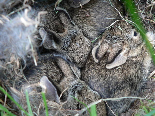 Photograph - Nestled In Their Den by Laurel Best