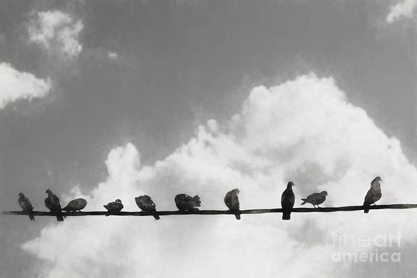 Wire Digital Art - Network Of The Bird Line  by Jorgo Photography - Wall Art Gallery
