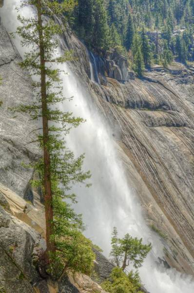 Photograph - Nevada Falls And Pine by Michael Kirk