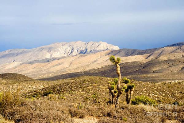 Wall Art - Photograph - Nevada Joshua Tree by Tim Hightower