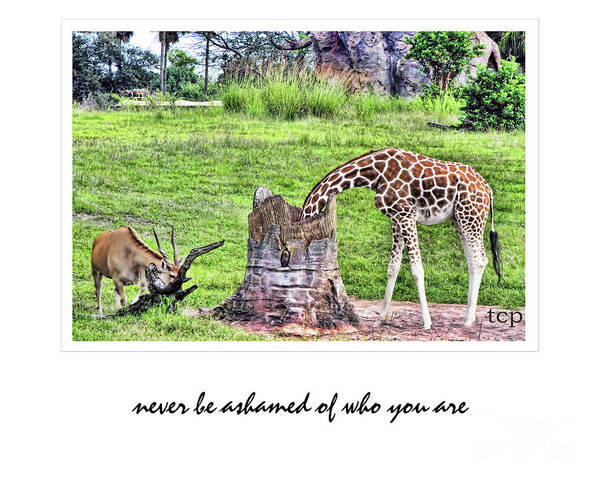 Never Be Ashamed Art Print