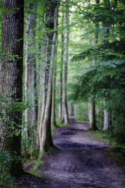 Photograph - Never Ending Trail by Miguel Winterpacht