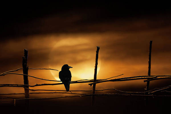 Photograph - Never More Quoth The Raven by Randall Nyhof