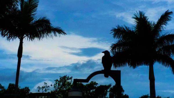 Photograph - Nevermore In The Tropics by Susan Vineyard
