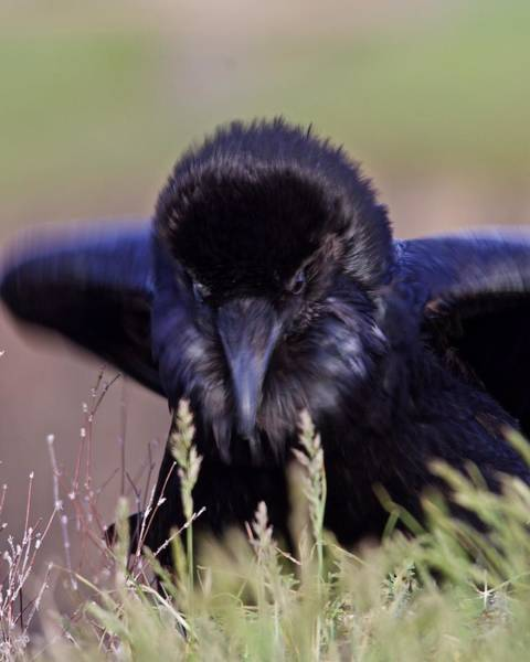 Photograph - Nevermore by Todd Kreuter