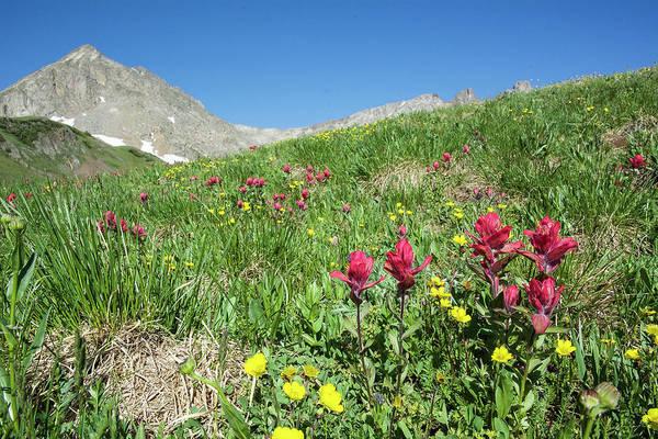 Photograph - Neversummer Wildflowers by Aaron Spong