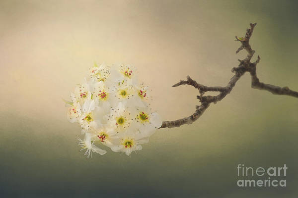 Wall Art - Photograph - New Awakening by Sharon McConnell