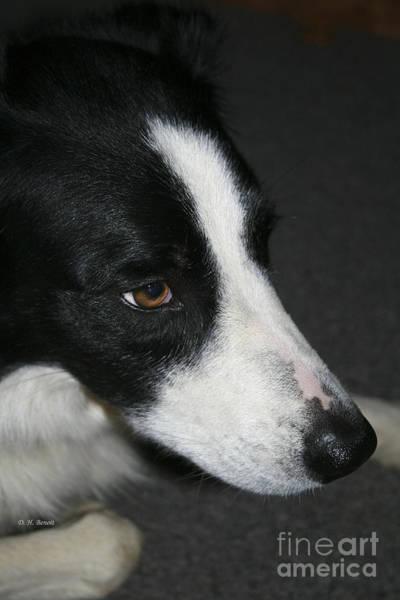 Photograph - New Dog Friend by Deborah Benoit