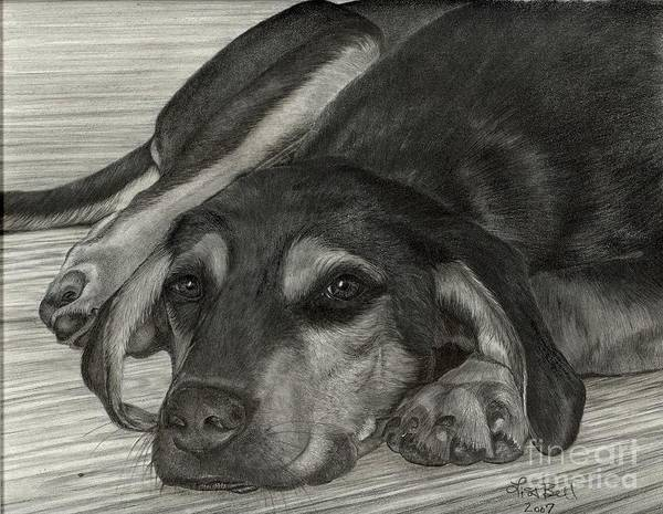 Wall Art - Drawing - New Dog Old Tricks by Lisa Bell