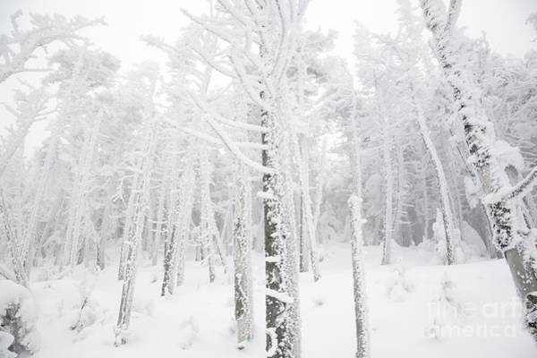 Photograph - New England - Snow Covered Forest by Erin Paul Donovan