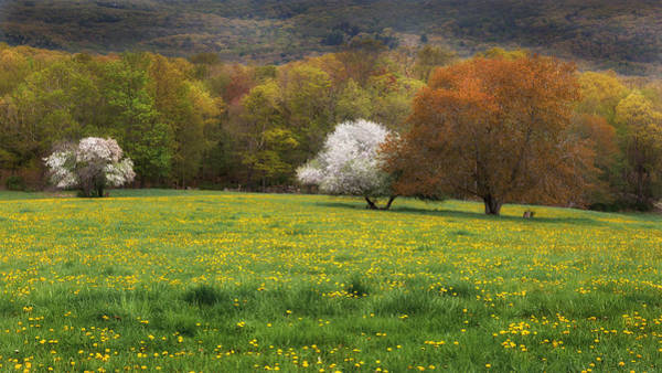 Photograph - New England Color Of Spring by Bill Wakeley