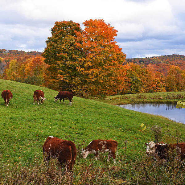 Photograph - New England Four Seasons - Autumn On Jenne Farm In Reading Vermont by Toby McGuire