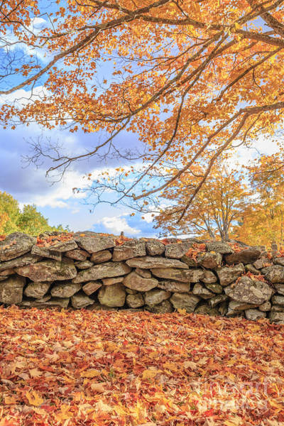 Photograph - New England Stone Wall With Fall Foliage by Edward Fielding