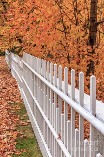 Photograph - New England White Picket Fence With Fall Foliage by Edward Fielding