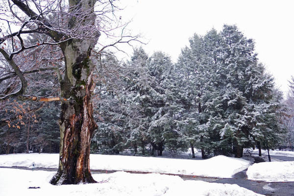 Photograph - New England Winter Trees by Toby McGuire