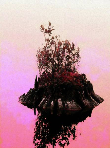 Photograph - New Growth On Old Dead Stump. by Rusty R Smith