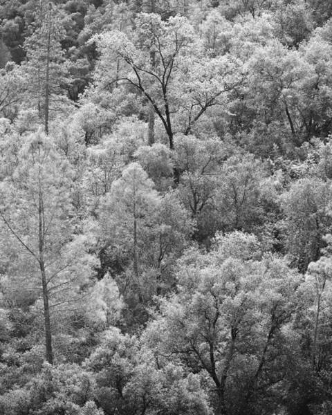 Wall Art - Photograph - New Growth Yosemite by Jim Dohms